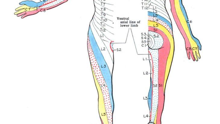 天秤座♎️  肩  両腕  両手  腕神経叢